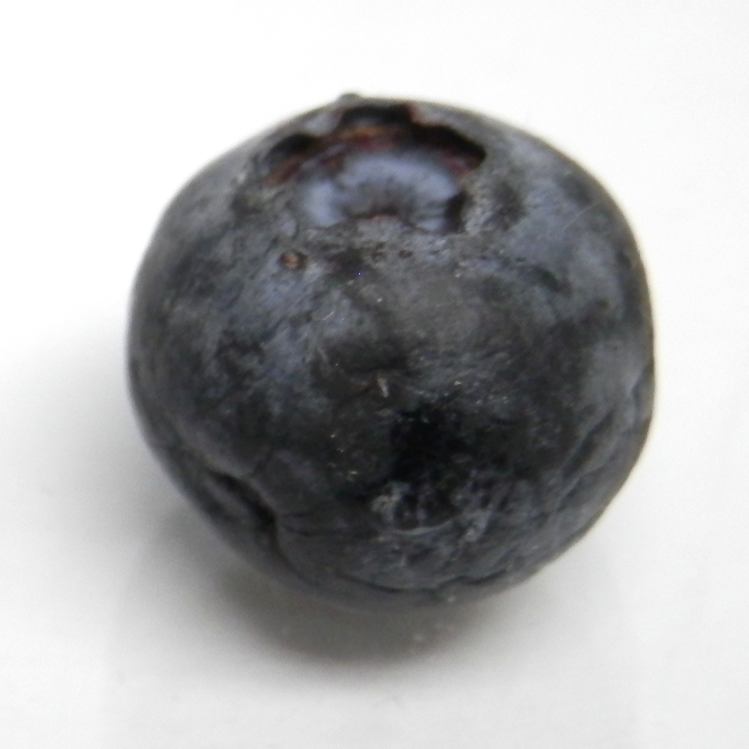 Blueberry organic matter degradation
