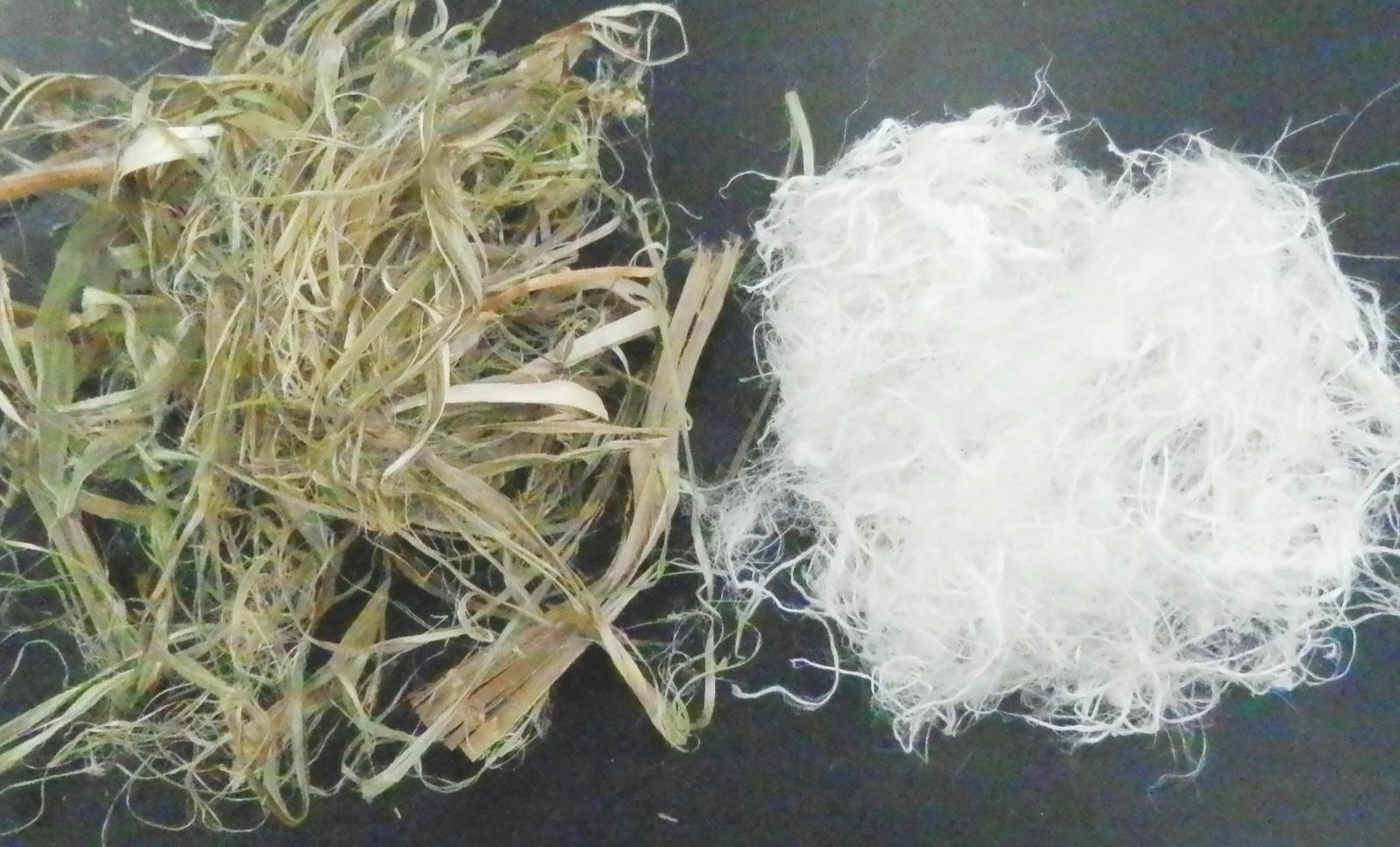 Hemp ribbons delignification and cottonization with Catalytic Advanced Oxidation Hydrogen Link