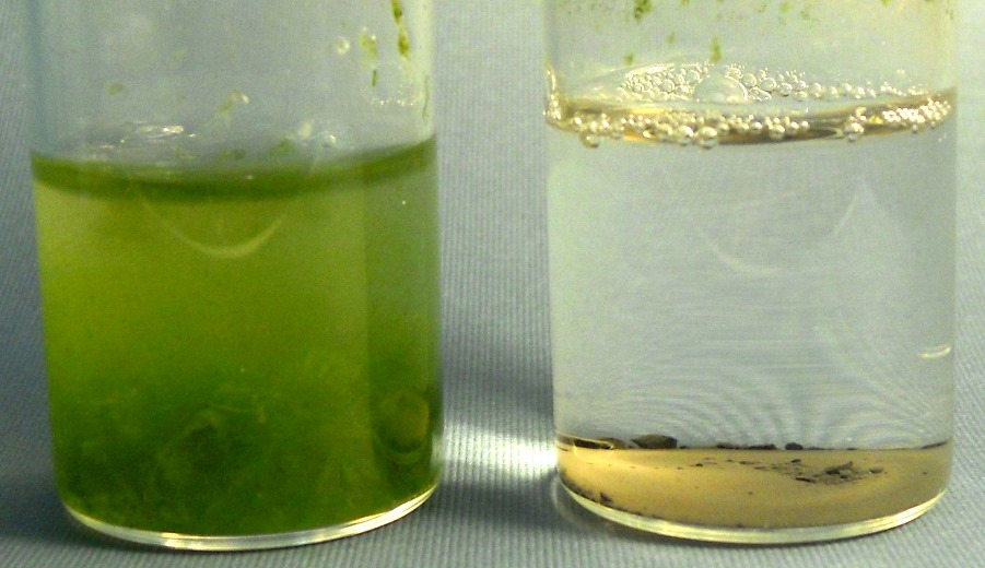 Organic Effluent (green algae) treated by Catalytic Advanced Oxidation with oxycatalyst