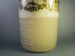 Water purification organic matter degradation